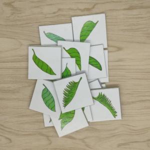 เกมการศึกษาปฐมวัย - เกมจับคู่ภาพใบไม้ให้เป็นภาพที่สมบูรณ์ (T10 04 )