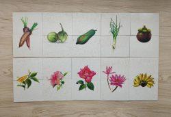 เกมการศึกษาปฐมวัย - เกมต่อครึ่งภาพ ผัก ผลไม้ ดอกไม้ 2 ชุด (T04 02 )