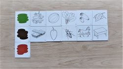 สื่อการเรียนการสอน -T12-01 เกมรู้จักสีของสิ่งที่เกิดจากธรรมชาติ