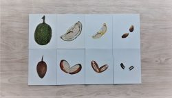 สื่อการเรียนการสอน -T04-13 เกมจัดหมวดหมู่ภาพส่วนภายนอกและภายในของผัก,ผลไม้