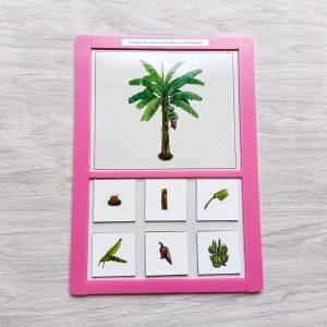 สื่อการเรียนการสอน -T04-12 เกมสังเกตรายละเอียดส่วนต่างๆของพืช และคำที่เป็นสัญลักษณ์