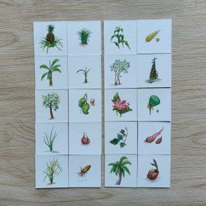 สื่อการเรียนการสอน - T04-01 เกมจับคู่ภาพพืชและส่วนที่พืชใช้ขยายพันธุ์