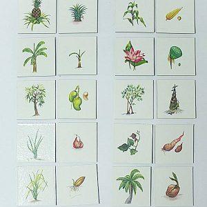 T04-01 เกมจับคู่ภาพพืชและส่วนที่พืชใช้ขยายพันธุ์