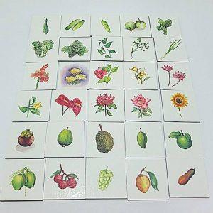 T04-03 เกมจัดหมวดหมู่ภาพผัก ผลไม้ ดอกไม้