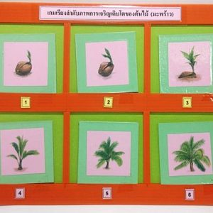 T04-05 เกมเรียงลำดับภาพการเจริญเติบโตของต้นไม้