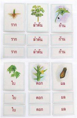 T04-11 เกมจัดหมวดหมู่ภาพกับคำที่เป็นสัญลักษณ์ของภาพ