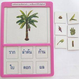 T04-12 เกมสังเกตรายละเอียดส่วนต่างๆของพืช และคำที่เป็นสัญลักษณ์