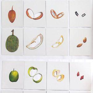 T04-13 เกมจัดหมวดหมู่ภาพส่วนภายนอกและภายในของผัก,ผลไม้